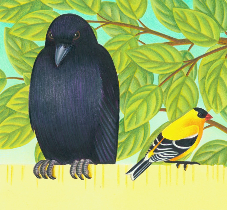 Birds Birds Birds Gallery. Illustration 1 'Birds can be many shapes and colors'