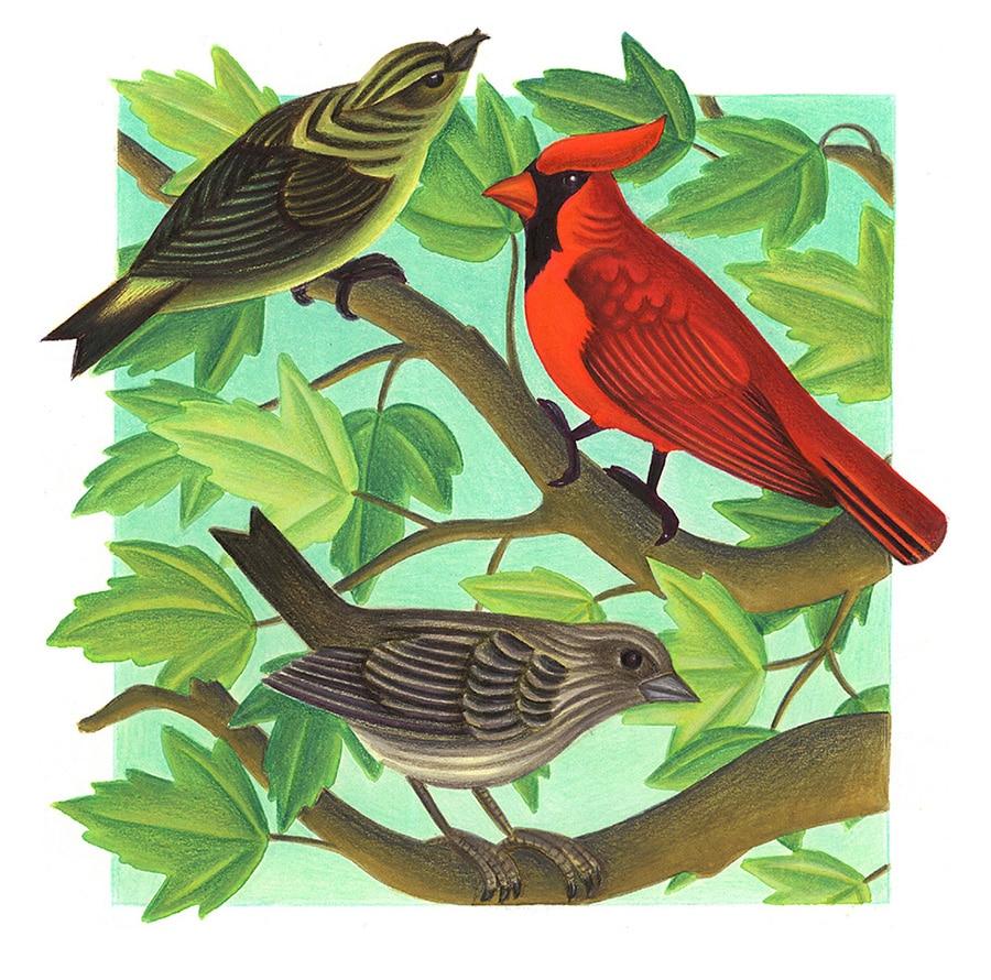 Birds Birds Birds Gallery. Illustration 2 'Birds with colors do show in trees'