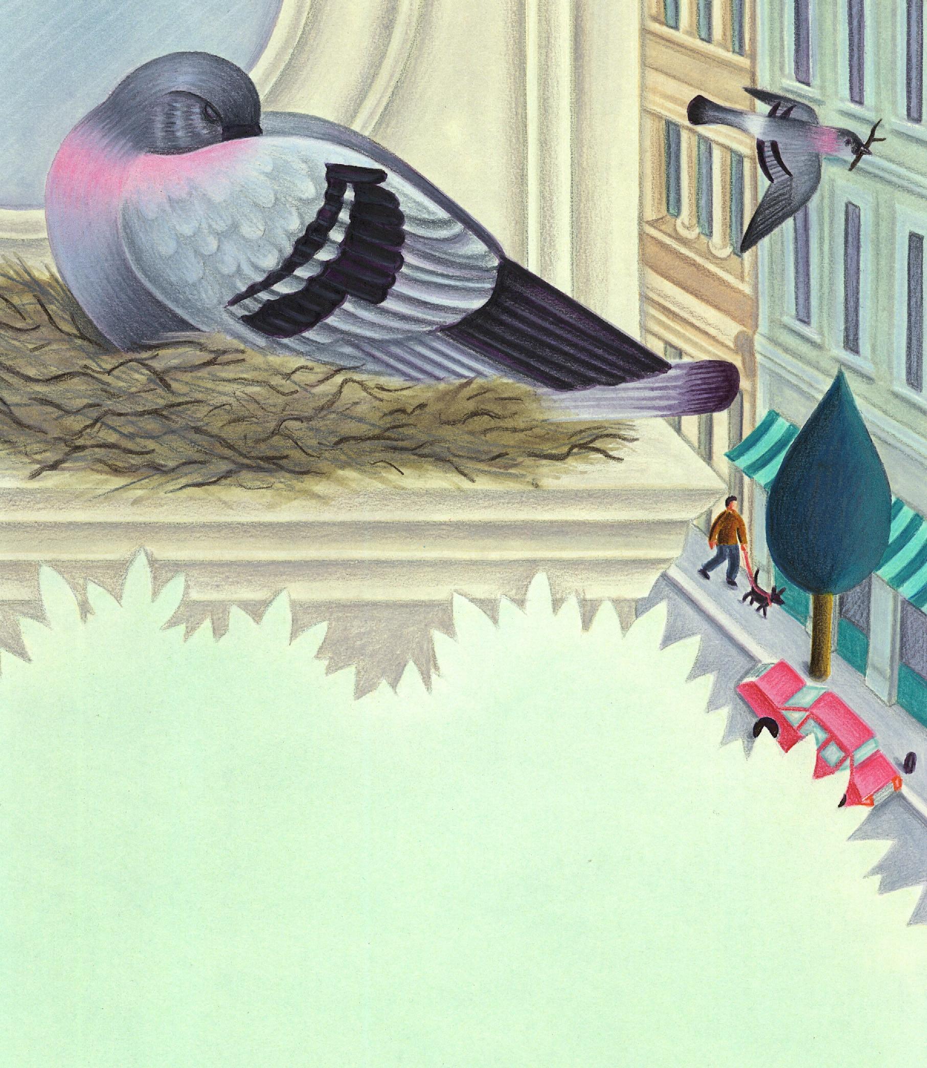 Birds Birds Birds Gallery. Illustration 6 'Birds might live by a window'