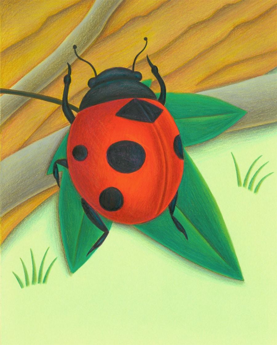 "Bugs Run Gallery. Illustration 1 ""I am a bug"" said the ladybug'"