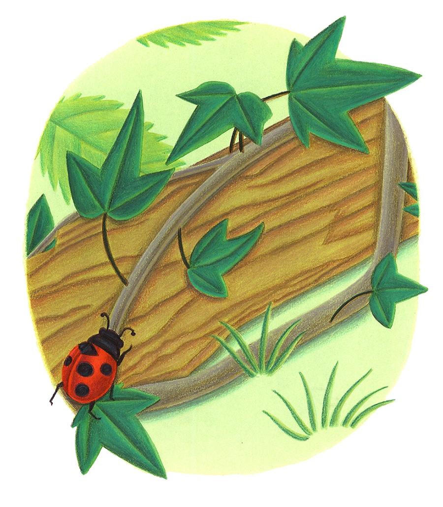 "Bugs Run Gallery. Illustration 2 ""I run up"" said the ladybug'"