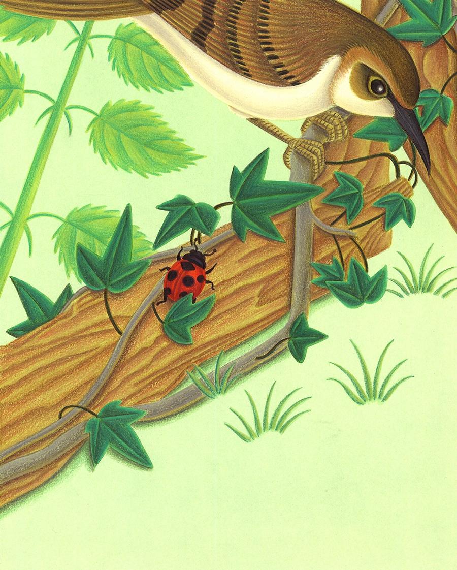 "Bugs Run Gallery. Illustration 3 ""But I stop!"" said the ladybug'"