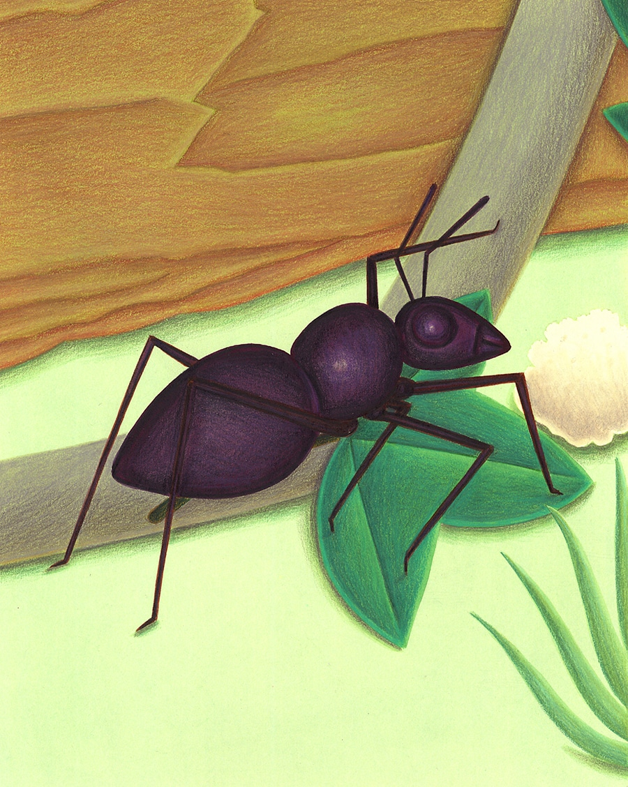 """Bugs Run Gallery. Illustration 4 """"I am a bug"""" said the ant'"""
