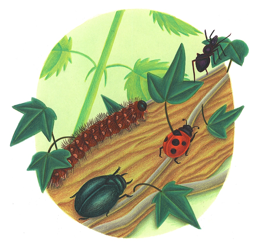 Illustration 7 'Four bugs run up'
