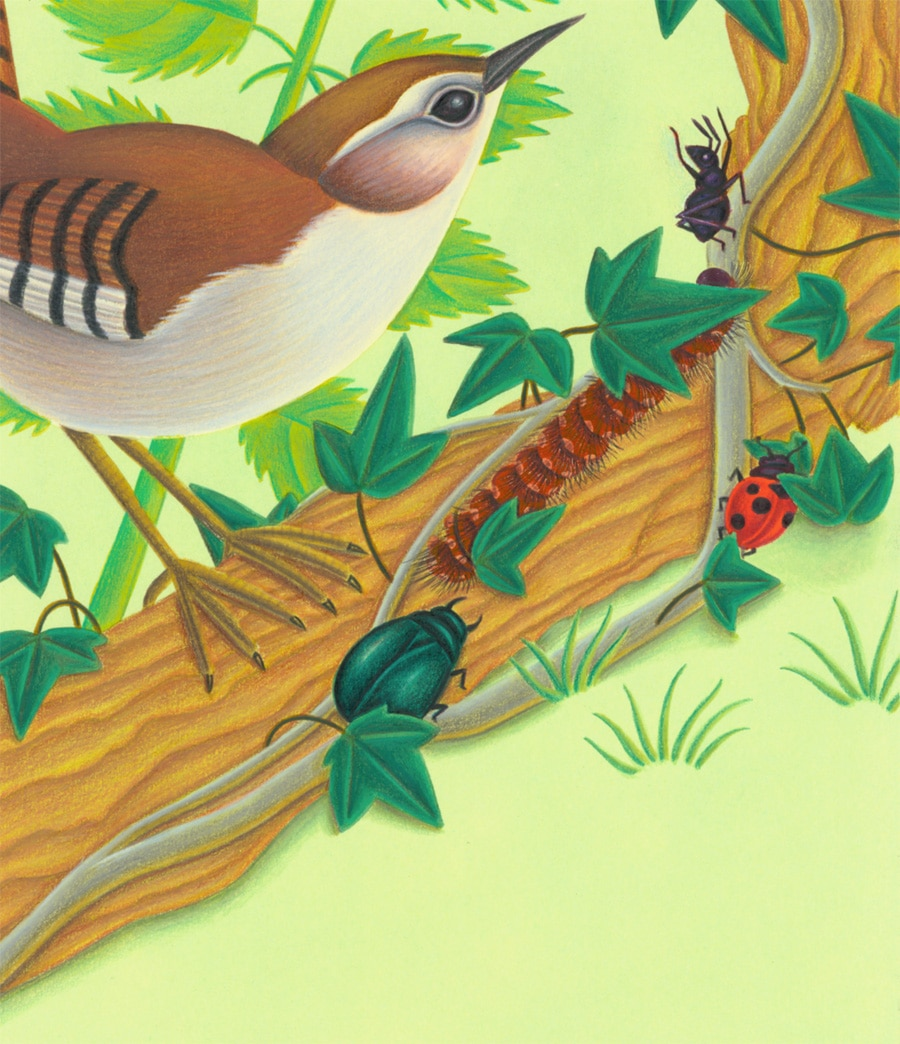 Illustration 8 'Four bugs stop on a log'