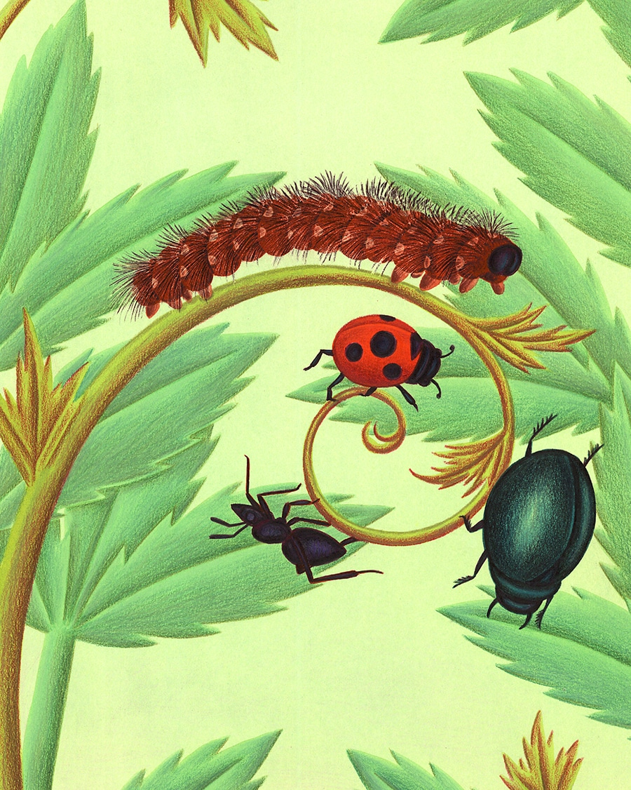 Illustration 9 'Cover, four bugs on a stem'