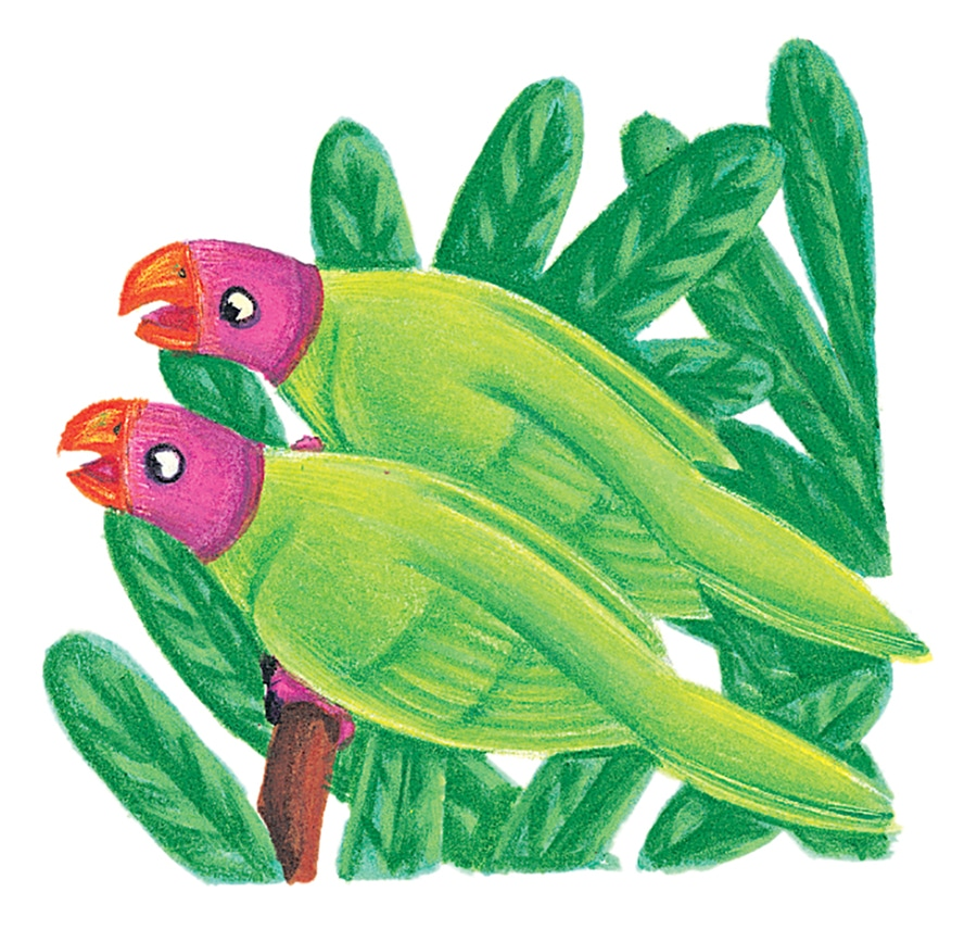 Illustration 56 'All the parrots were chattering' (Pixel dimensions available w644 x h613)