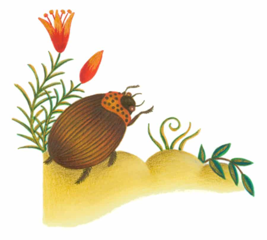 Illustrations for Children's Picture Books. Illustration 18 'The Gold-Coated Beetle' (Pixel dimensions available w868 x h782)