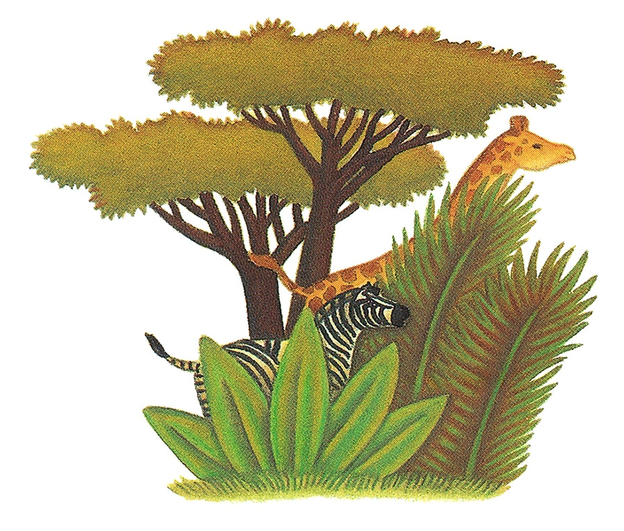 Illustration 13 'Giraffe and Zebra, hiding' (Pixel dimensions available w1192 x h 1014)