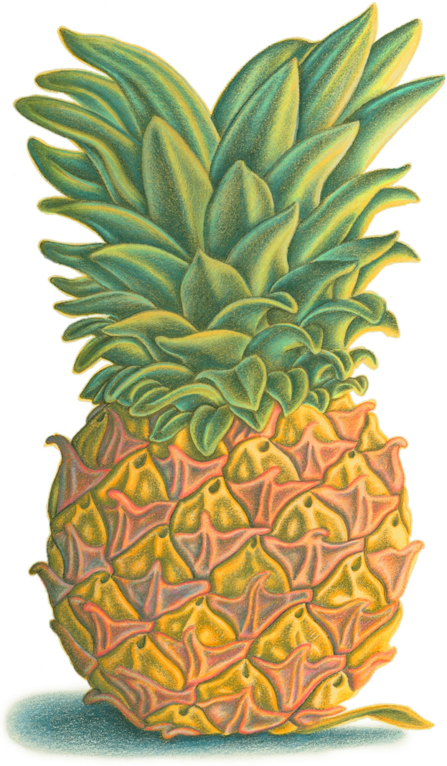 Hand Drawn Food Illustrations. Illustration 1 'The Pineapple' (Pixel dimensions available w1819 x h2956)