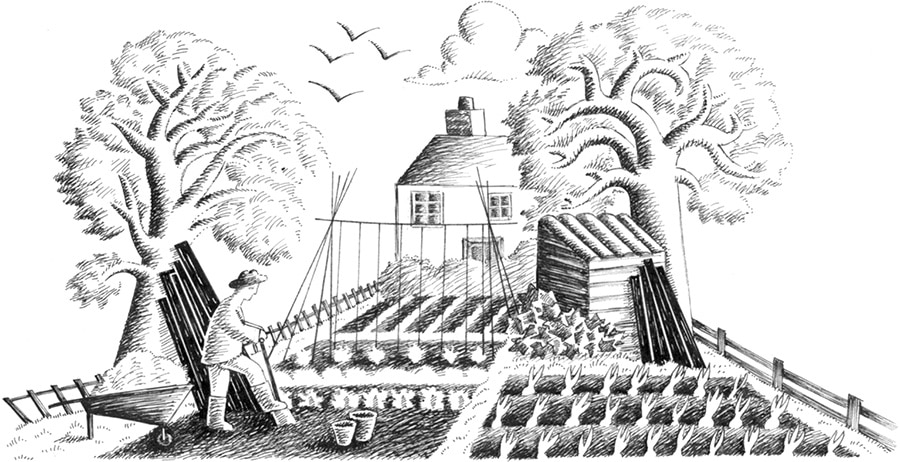 Illustration 12 'The Vegetable Plot' (Pixel dimensions available w1668 x h861)