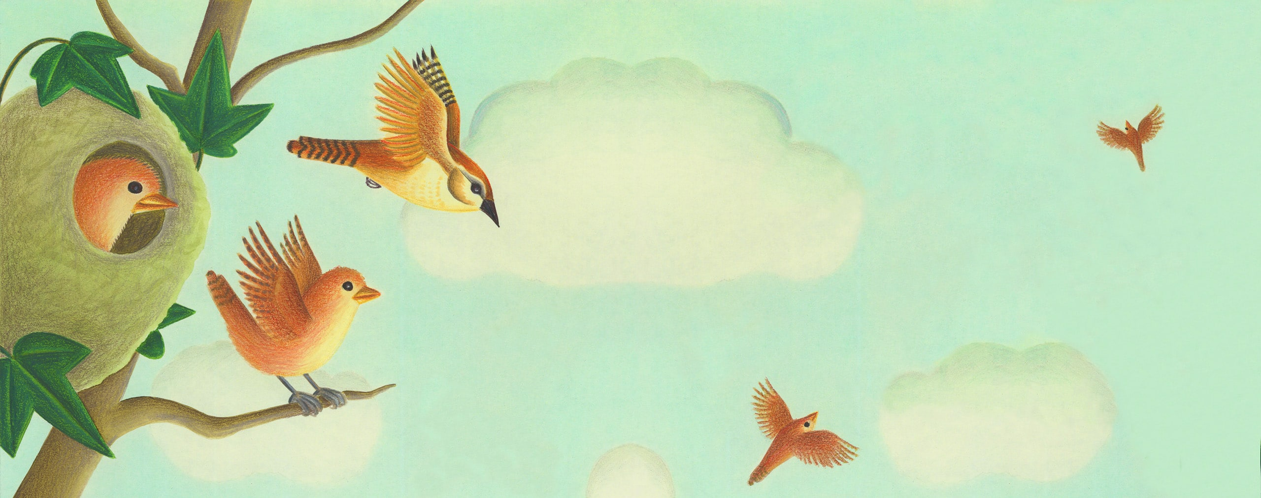 Birds Birds Birds Gallery. 'Banner image'