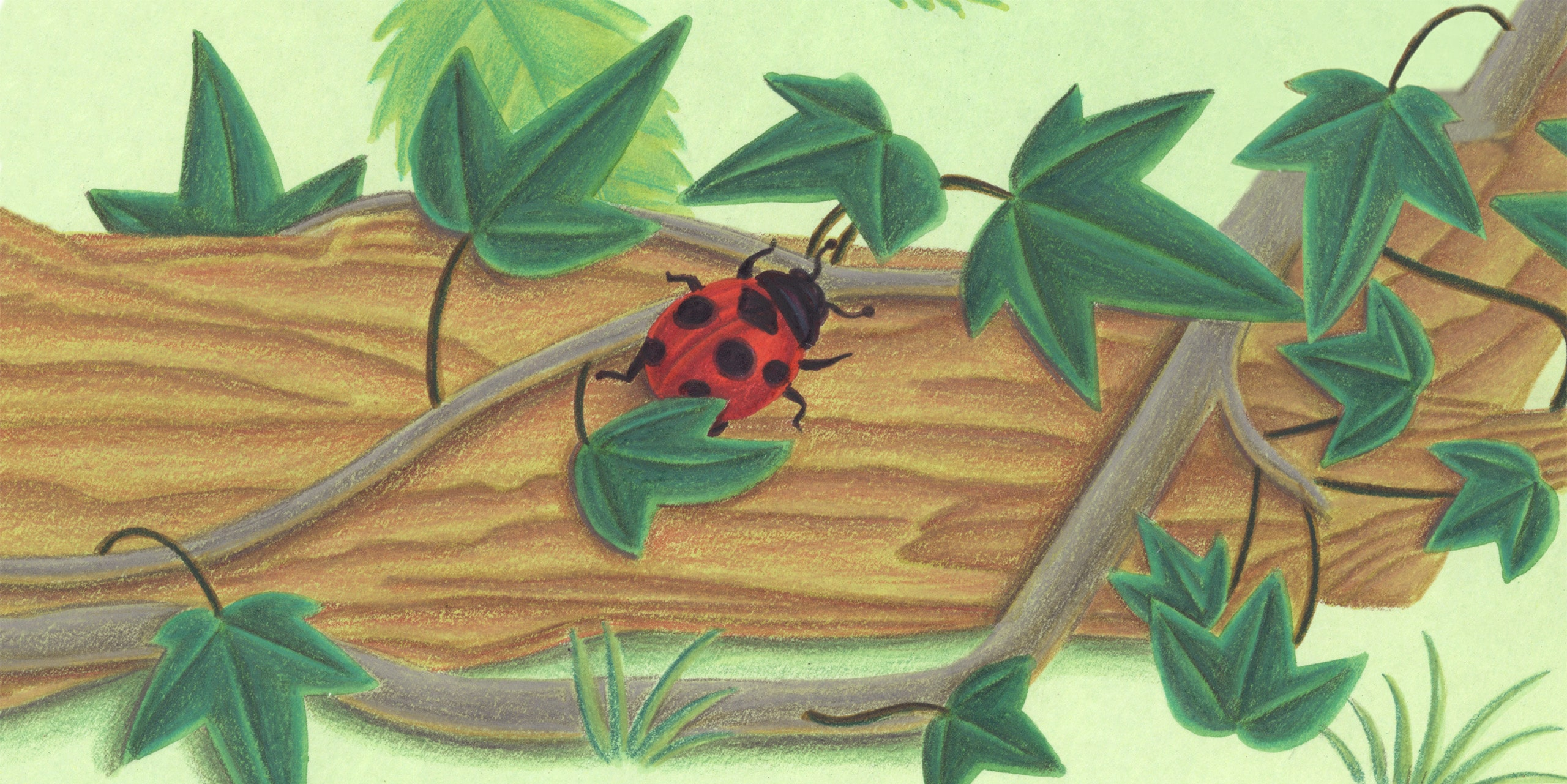 Bugs Run Gallery.' Banner image'