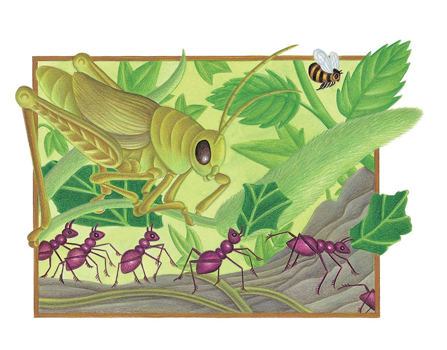 The Lion Classic Aesops Fables Gallery. Illustration 42 'The Ant and the Grasshopper' (Pixel dimensions available w1962 x h1336)