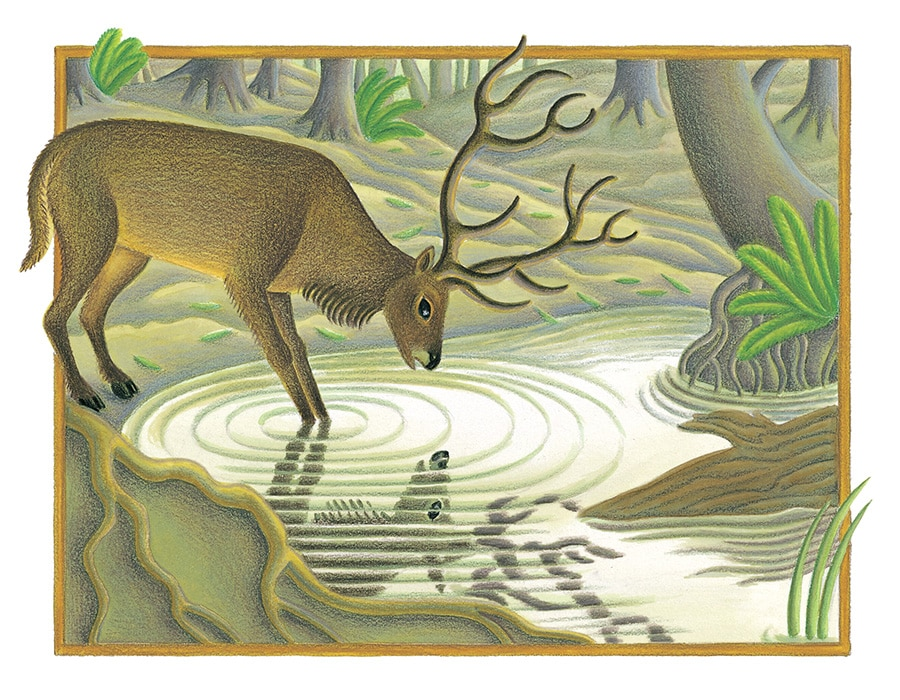The Lion Classic Aesops Fables Gallery. Illustration 43 'The Stag at the Pool' (Pixel dimensions available w1770 x h1306)
