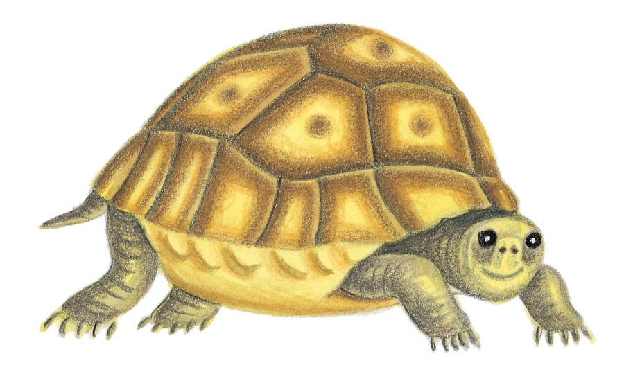 Illustration 8 'The Tortoise' (Pixel dimensions available w805 x h476)